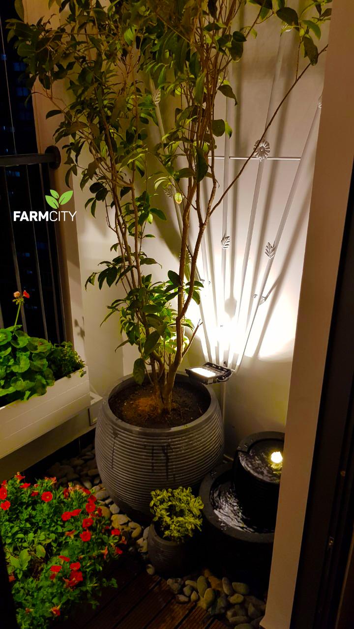 Mau-trang-tri-ban-cong- B1204-Golden-Palm